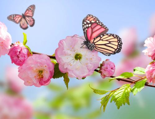 Accogliamo la primavera